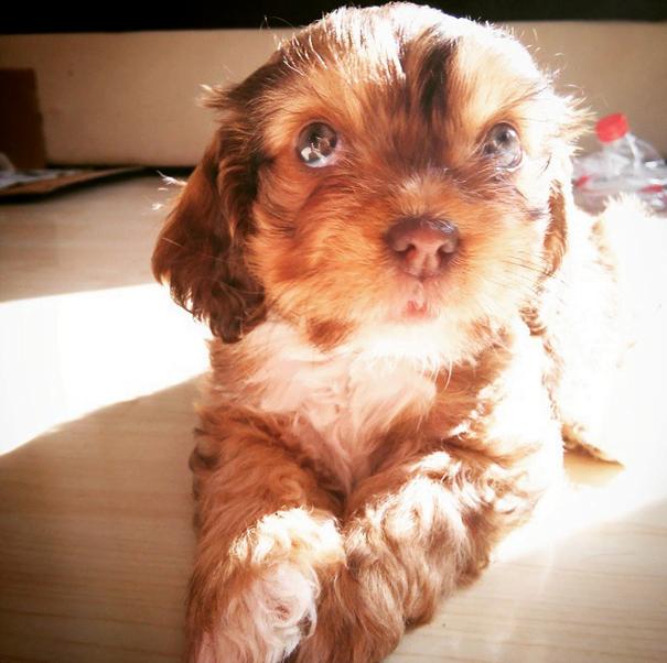 el perro más adorable de instagram