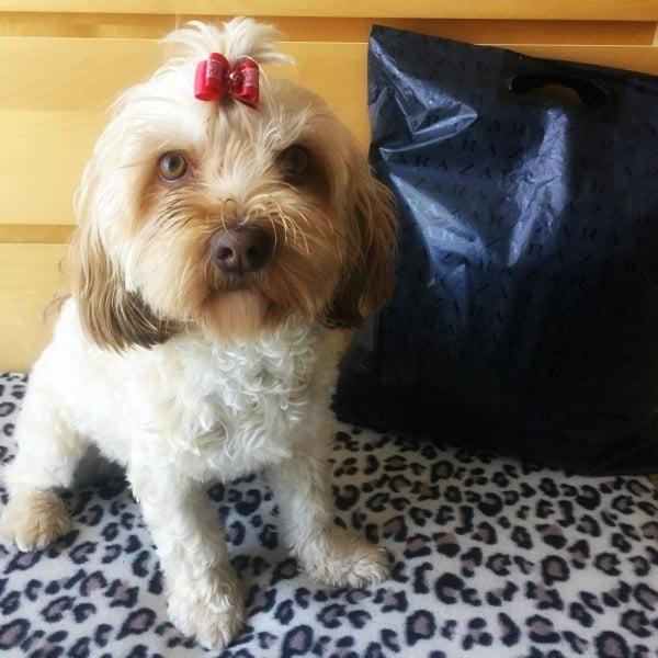 tiendas de ropa que aceptan la entrada de perros