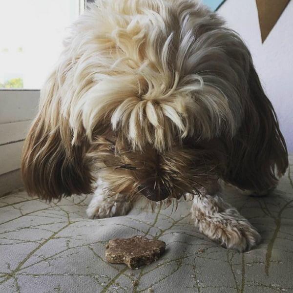 galletas sanas para perros