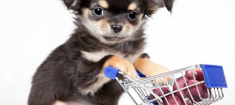hacer la compra con perro