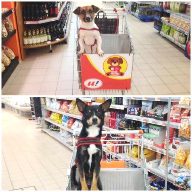 carros para comprar con perro