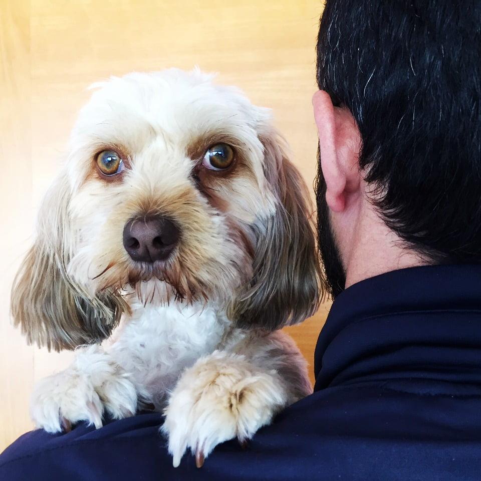 quién cuida perros