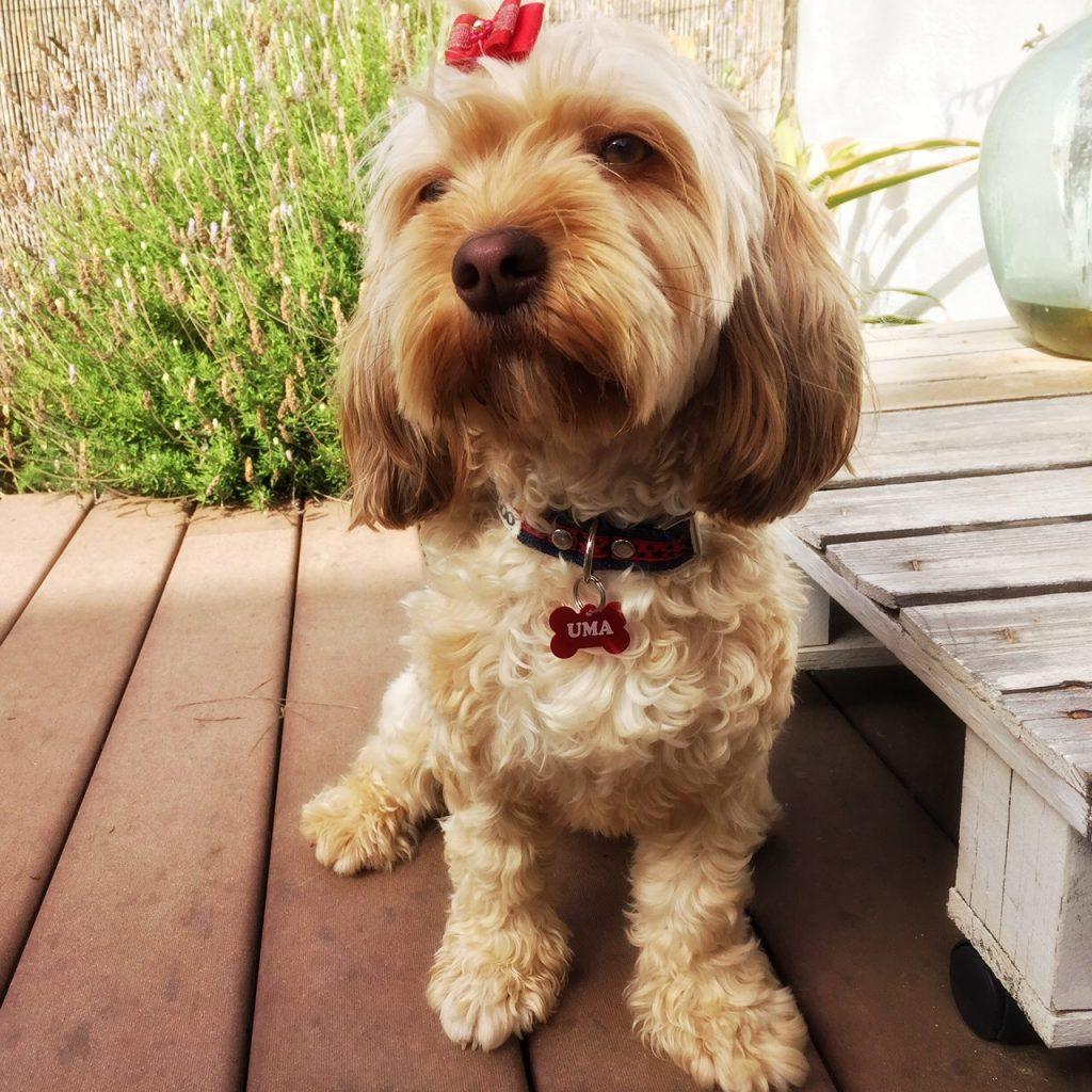 placas de identificación para perros