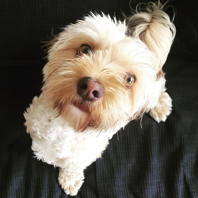 instagram para perros