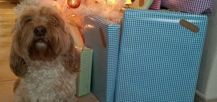 ideas de regalo originales para perros