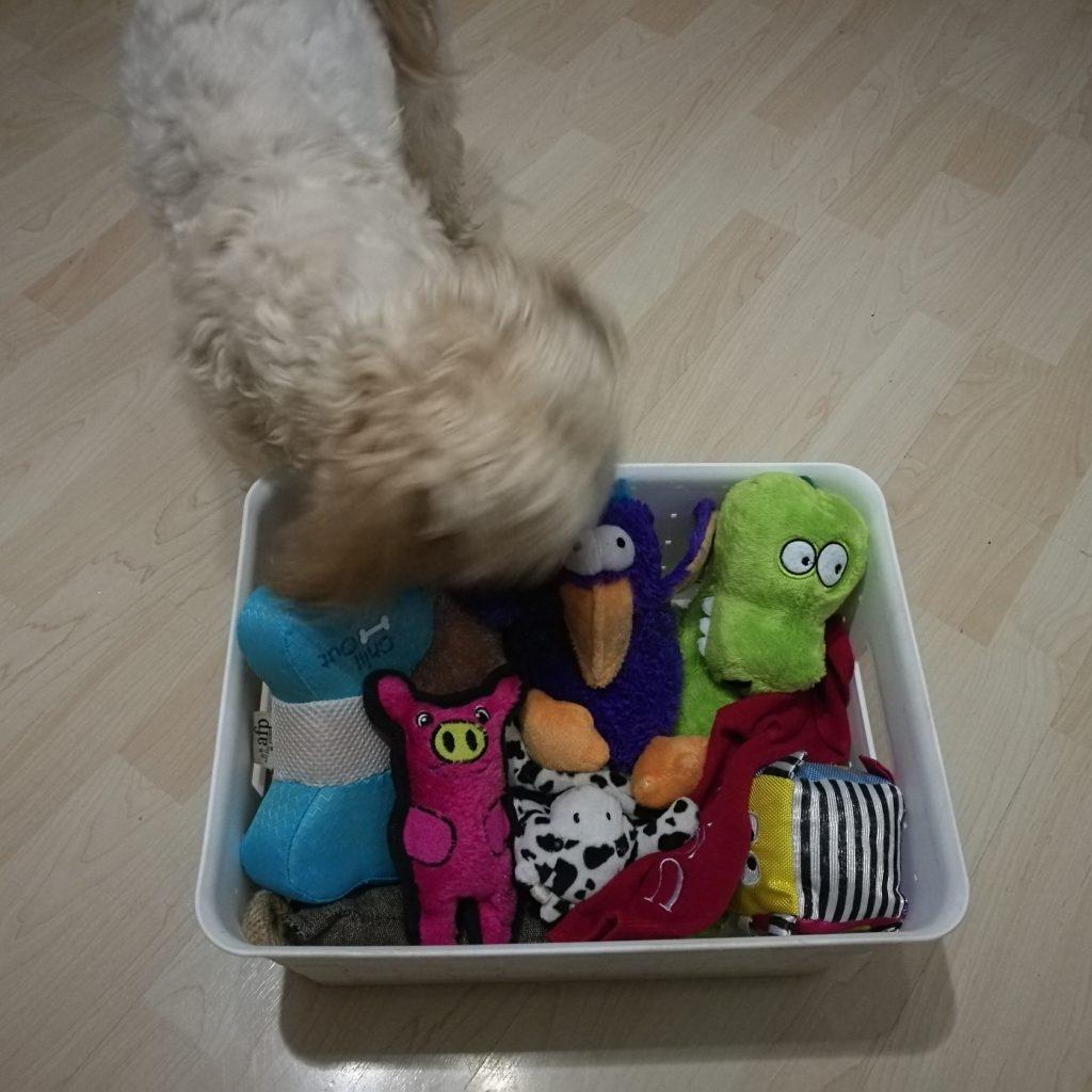 cómo lavar los juguetes del perro