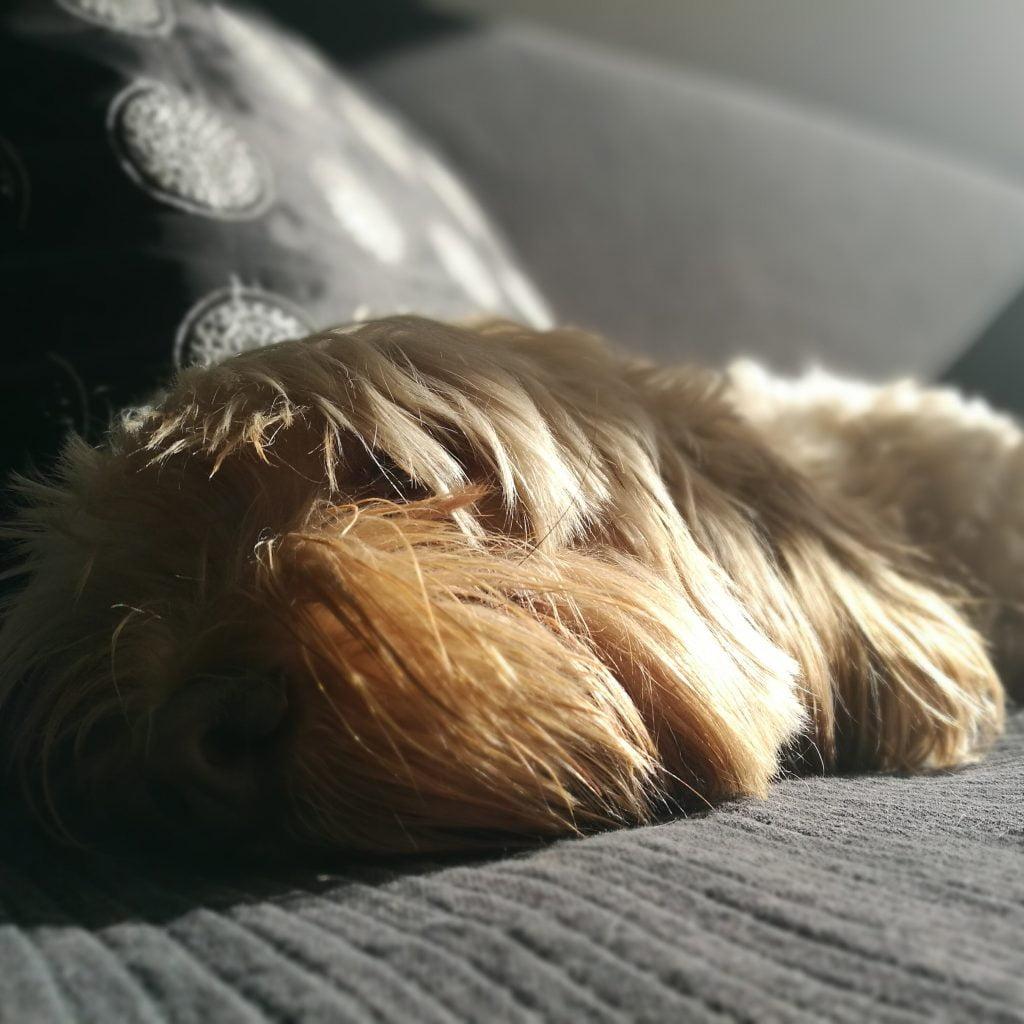 perros les gusta los baños de sol