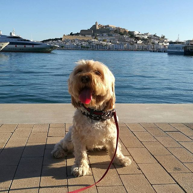 Ibiza Dog Friendly