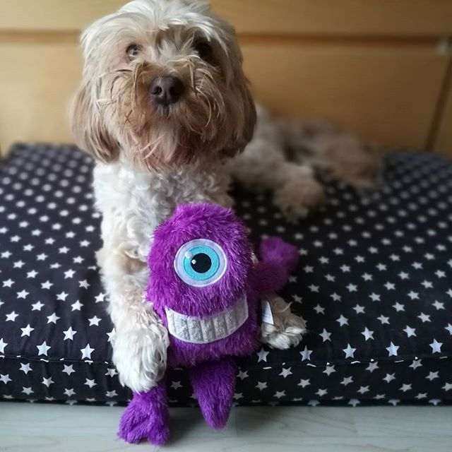 cómo llama la atención un perro