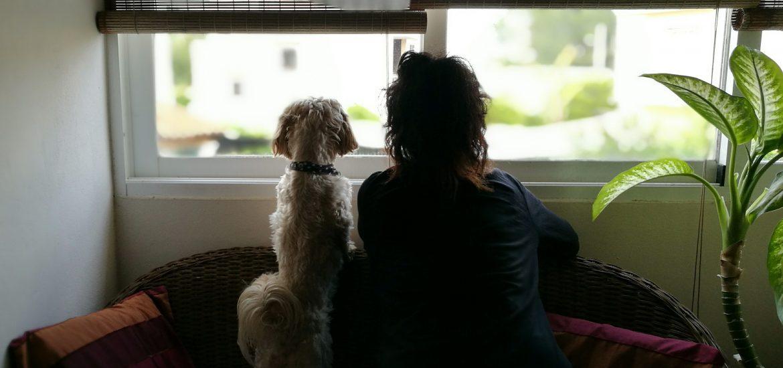 cómo el perro llama la atención