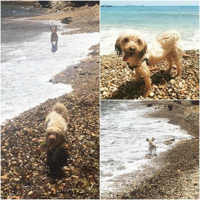 playa para perros Es Faralló