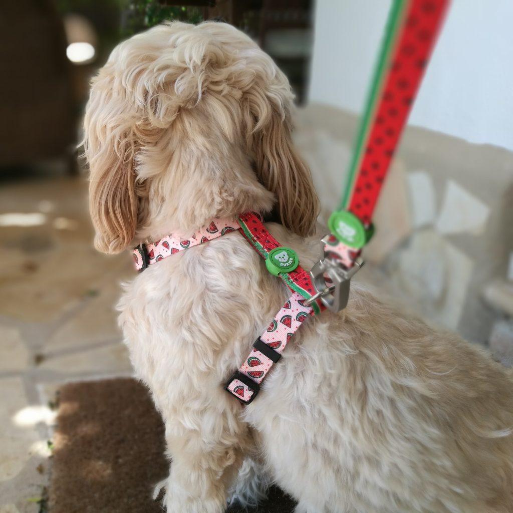 conjuntos de paseo de diseño para perros