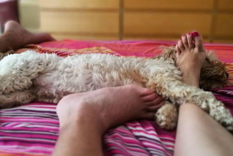 el perro, un miembro más de la familia