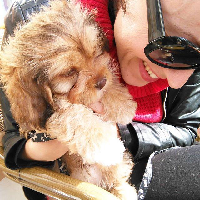 perro: un miembro más de la familia
