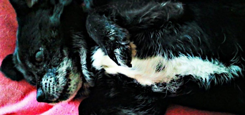 explicar a un niño la muerte de su perro