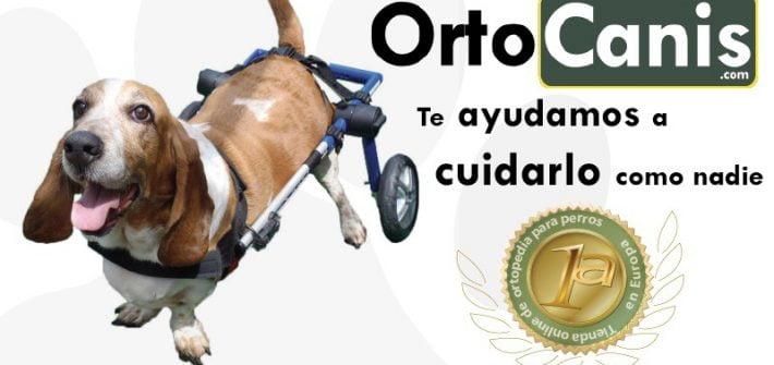 Ortopedia para Perros