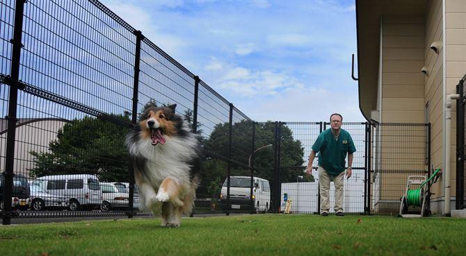 buscador de residencias para mascotas