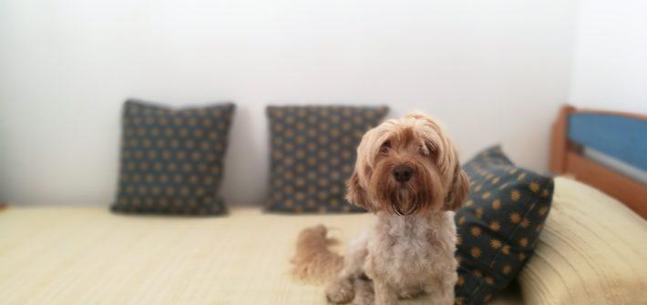 conducta territorial en perros