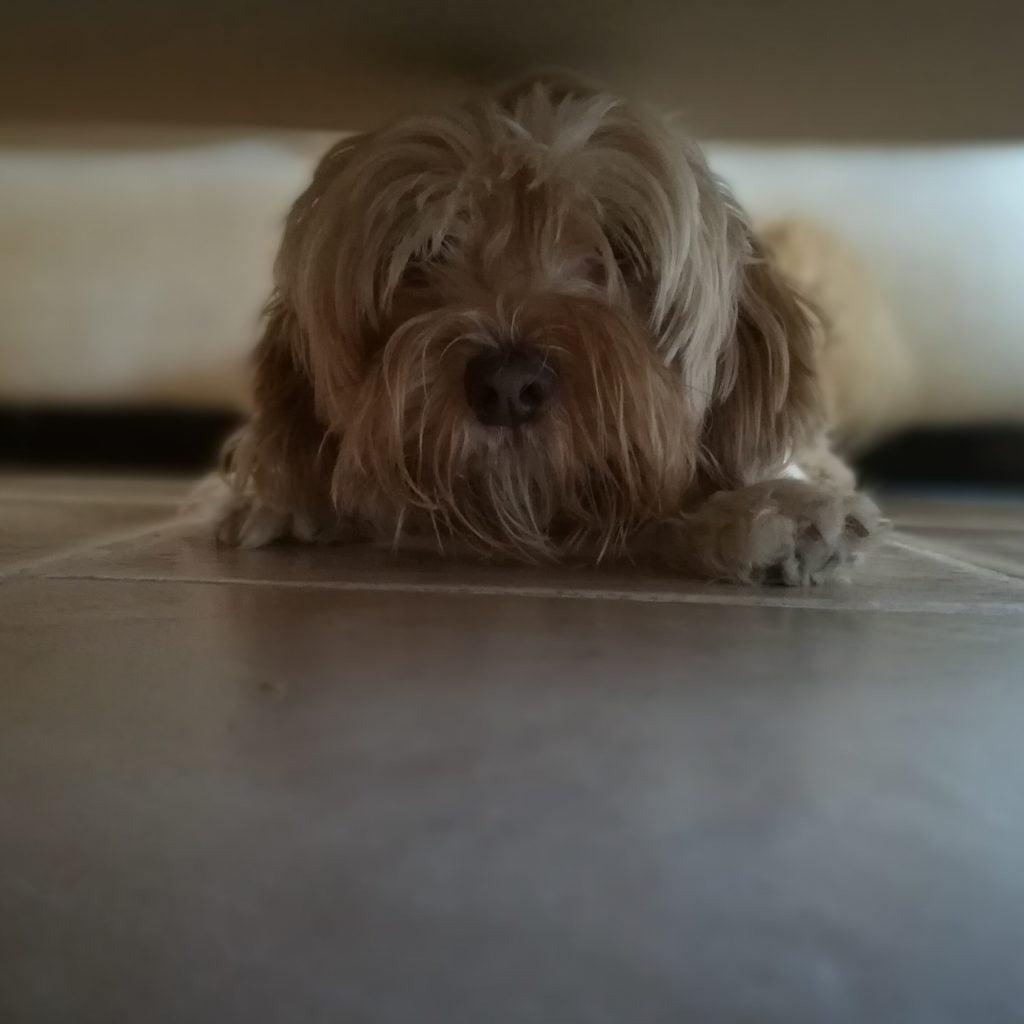 perros escondidos