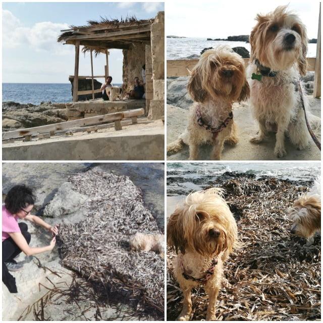 vacaciones con perro