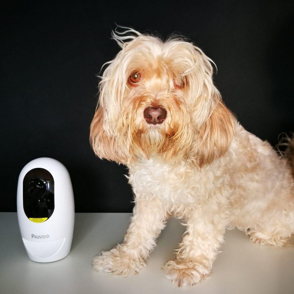 Pawbo, cámara interactiva para mascotas