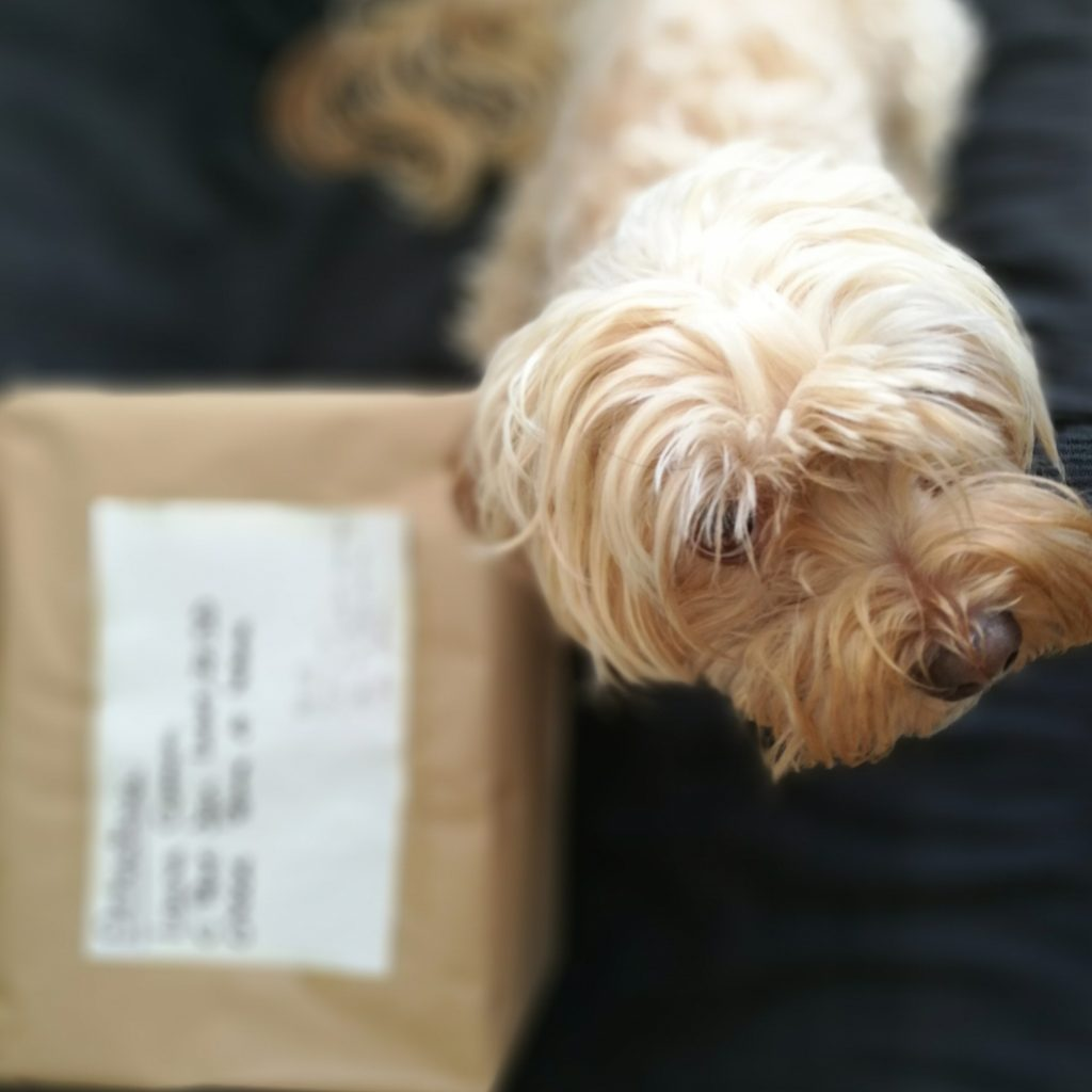 correo para mi perro