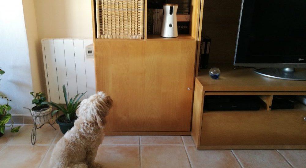 Furbo, cámara inteligente para perros