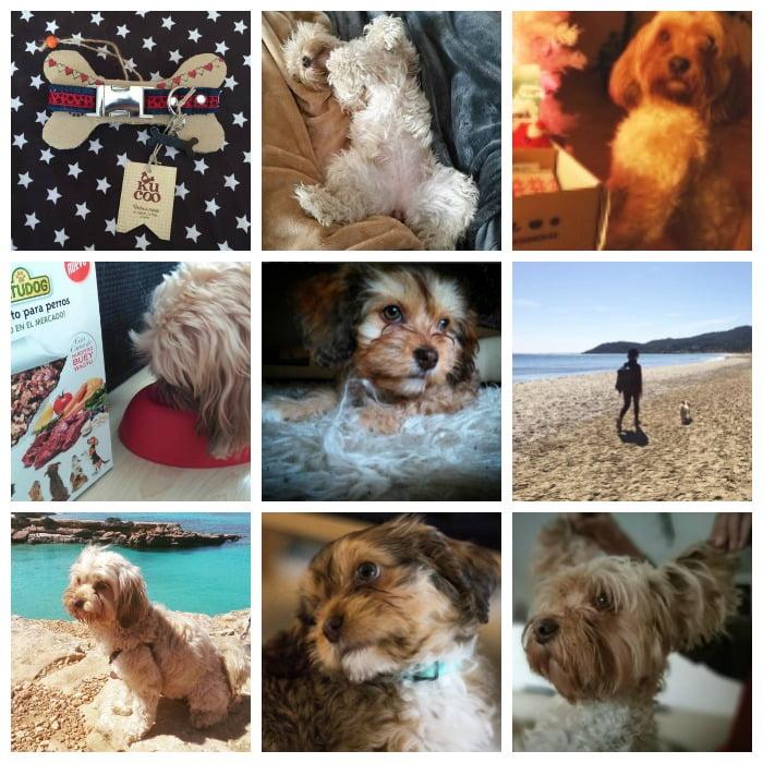 lo más visto en perros en Pinterest