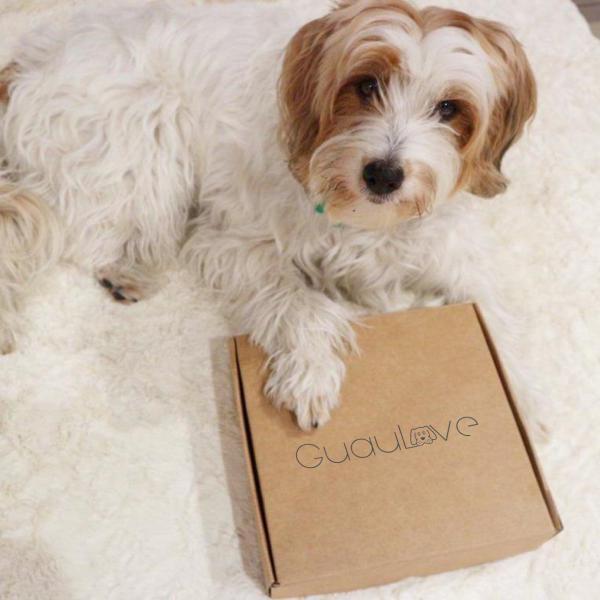 regalos para perros para Navidad