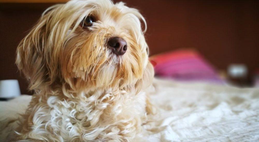 perros con miedo a la pirotecnia