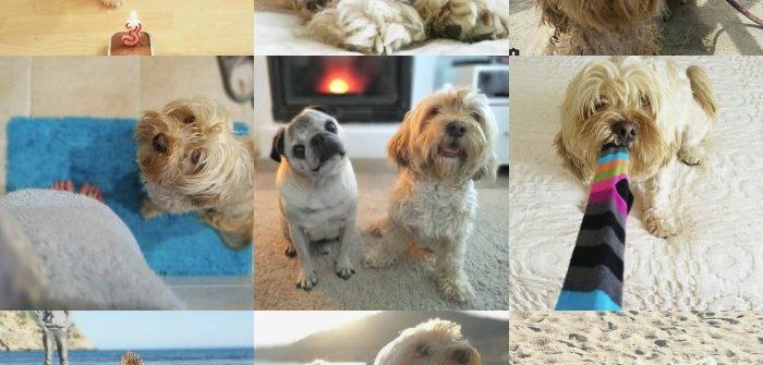 lo más popular en perros
