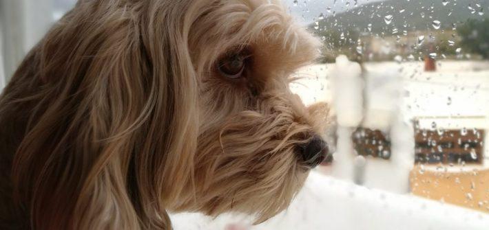 planes con perro los días de lluvia