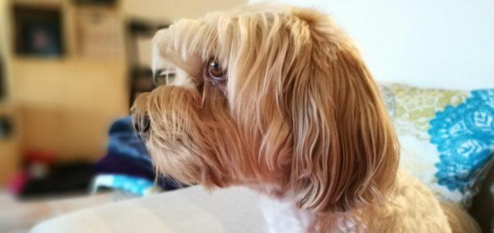 mentiras sobre los perros