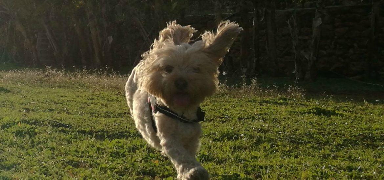 antropomorfismo en perros