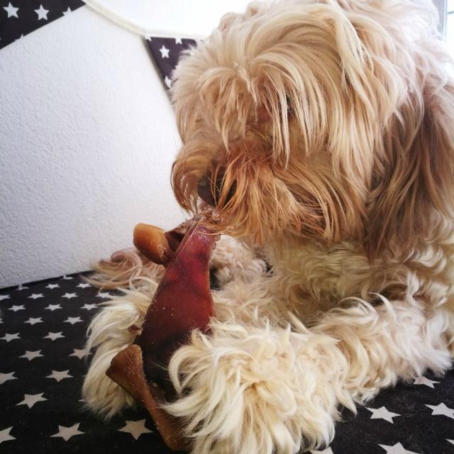 Alimentos tóxicos para el perro