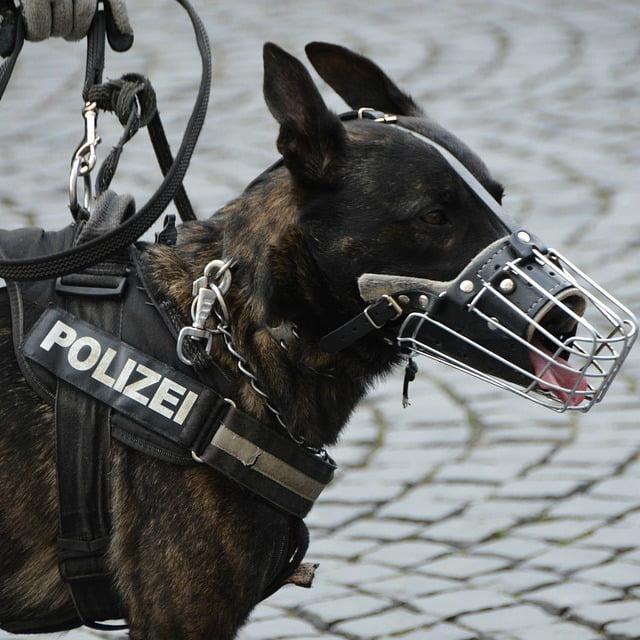 perros de trabajo