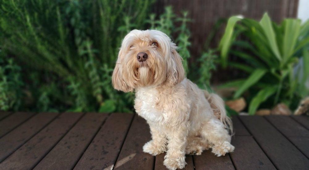 desparasitación interna del perro