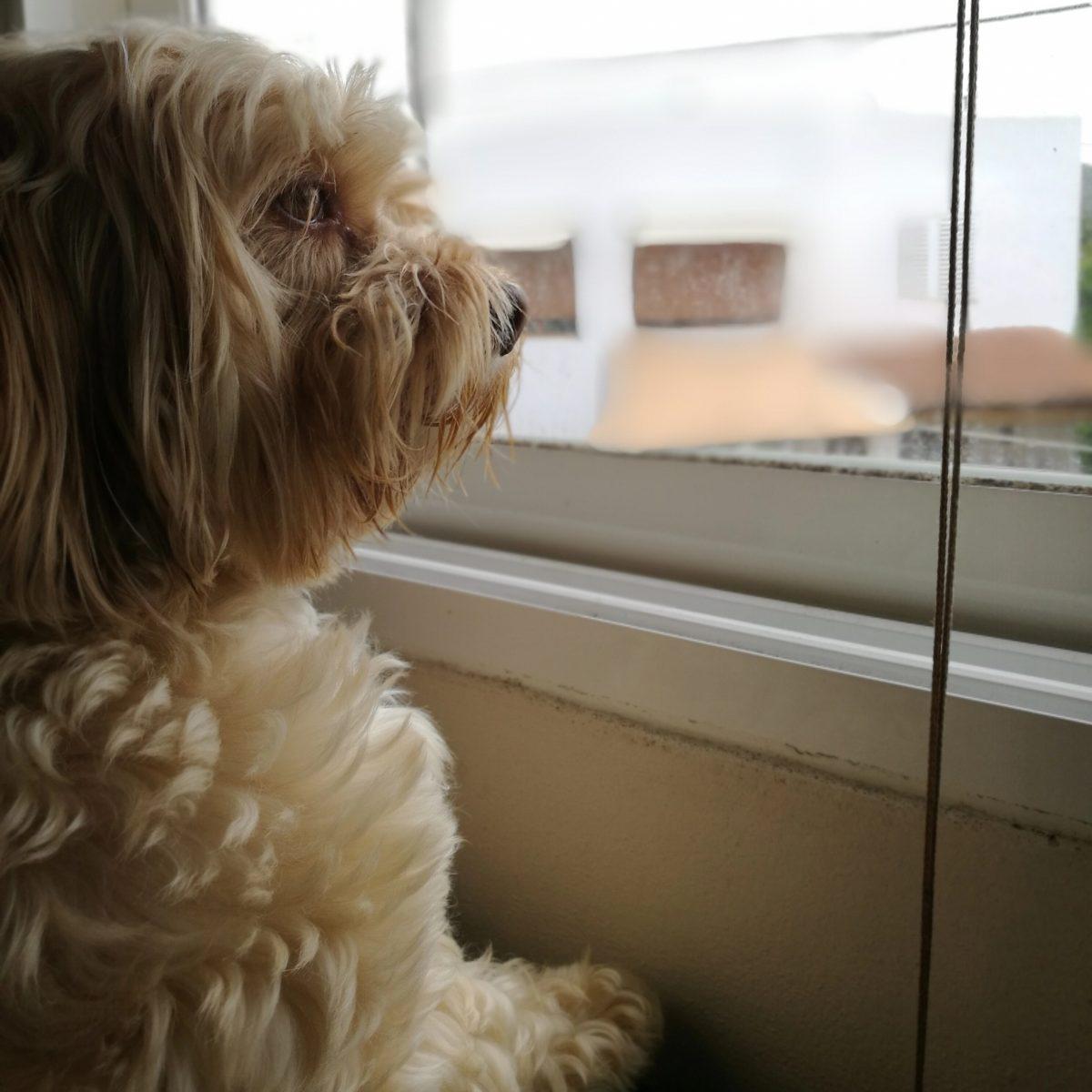 perro que se escapa
