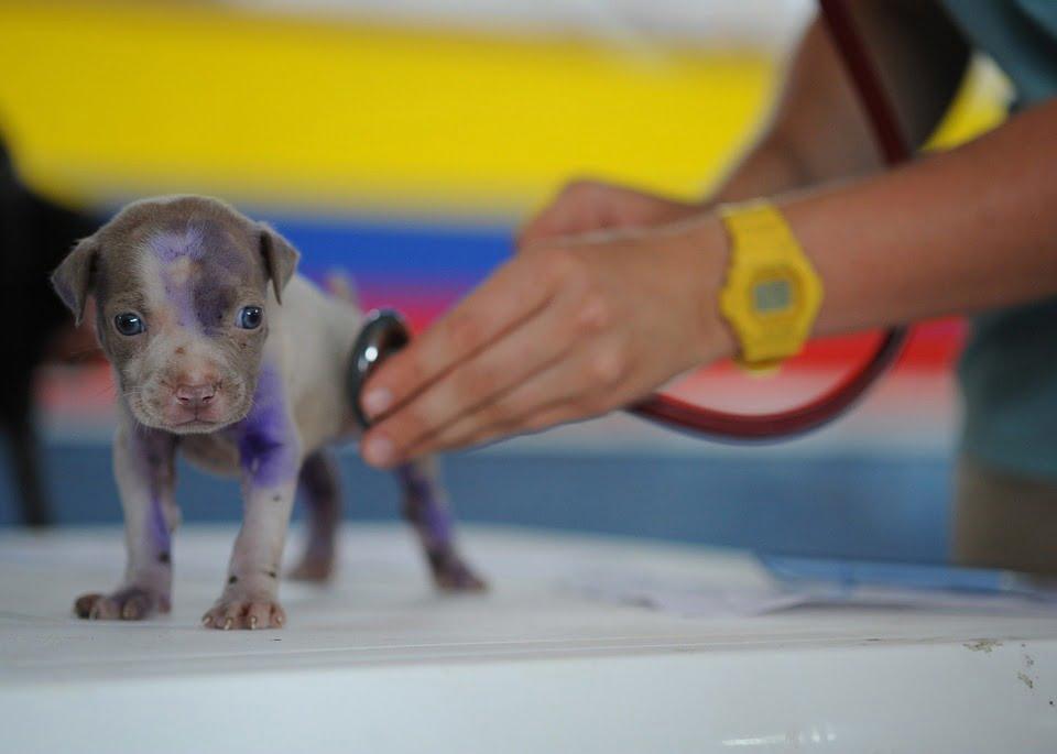 curso de auxiliar clínico veterinario