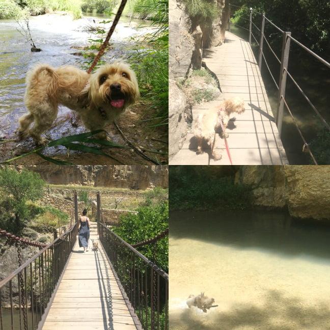 viajar con perro a Albarracín