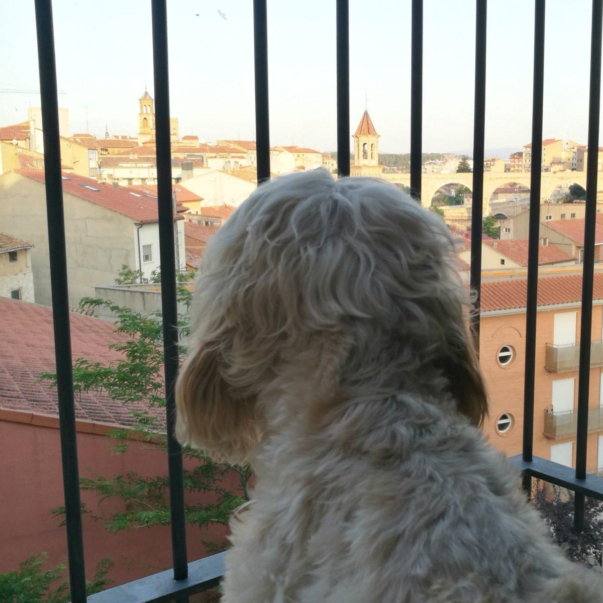 viajar con perro a Teruel