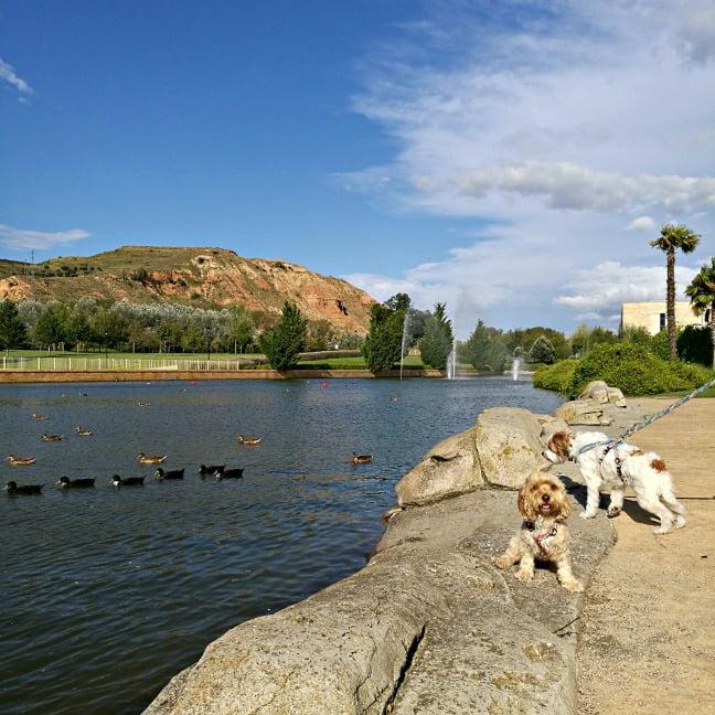 viajar con perro a La Rioja