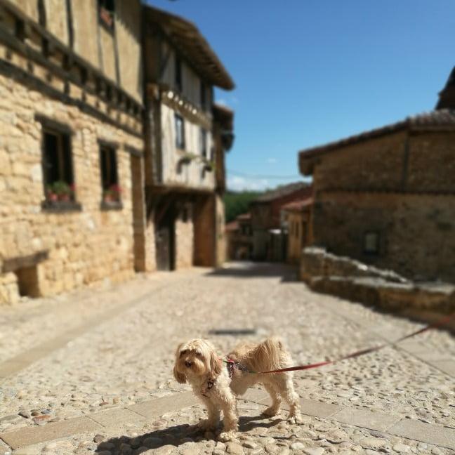 viajar con perro a Calatañazor