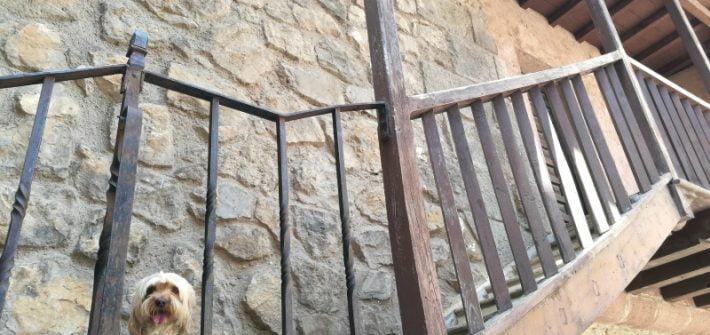 viajar con perro a Teruel y alrededores