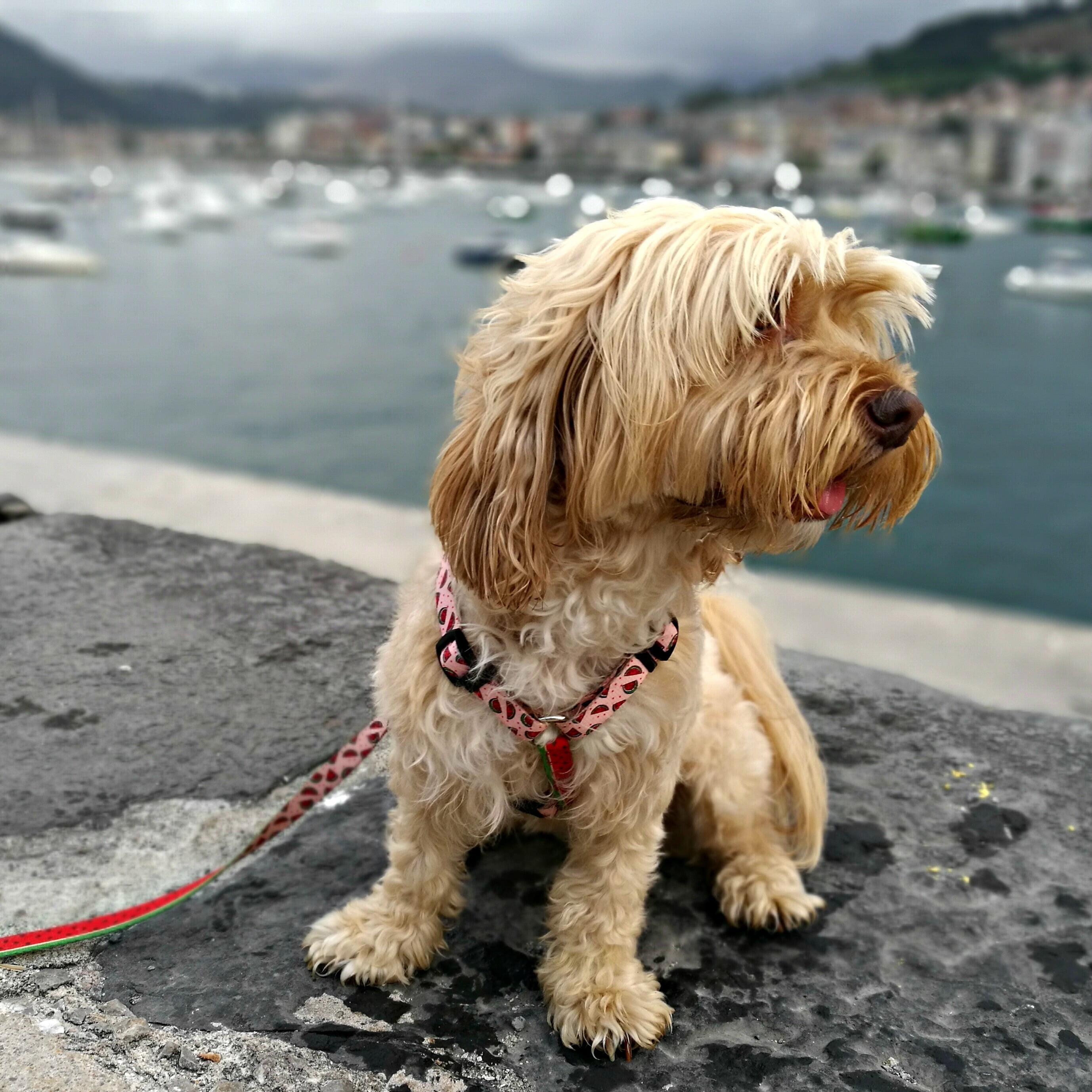 excursión con perro a Castro Urdiales