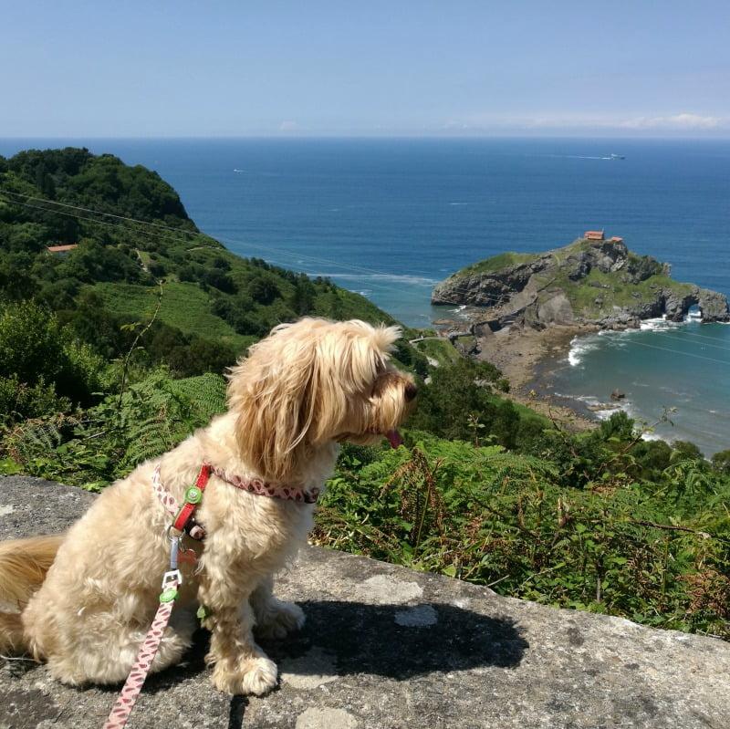 excursión con perro a San Juan de Gaztelugatxe