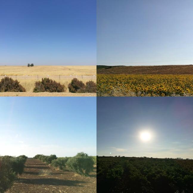 viajar con perro a Extremadura