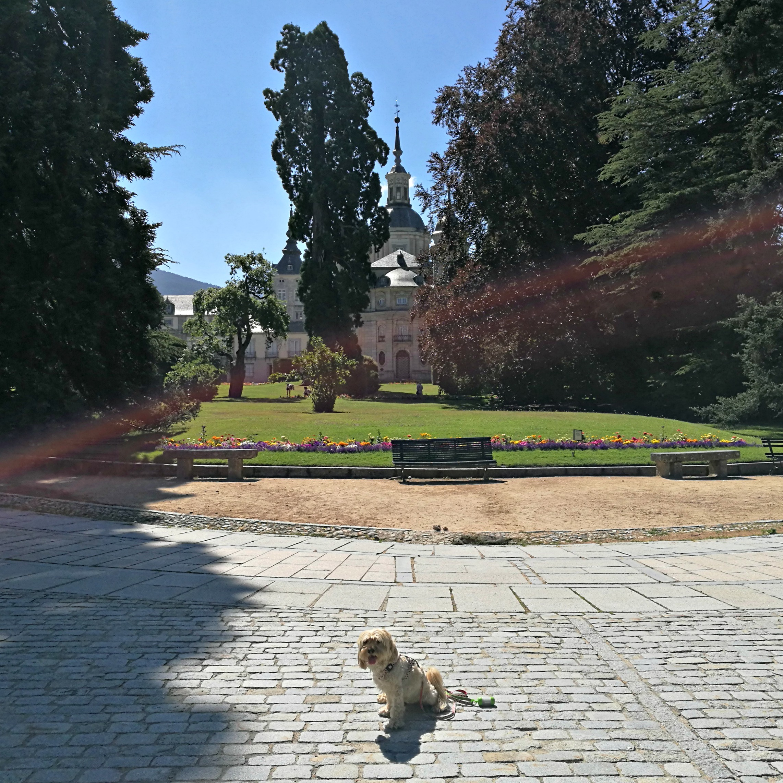 excursión a La Granja de San Ildefonso con perro