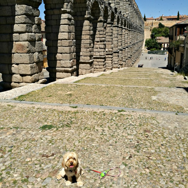 excursión con perro a Segovia