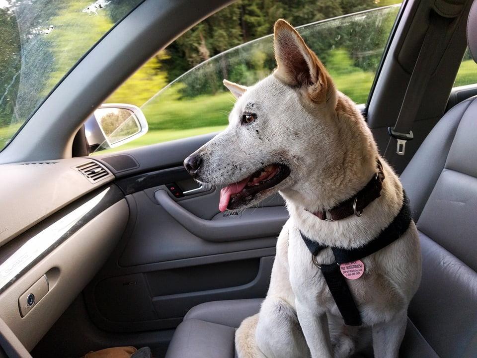 accesorios de viaje para perro